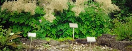 Ogród Botaniczny - szkoda, że dzień był deszczowy