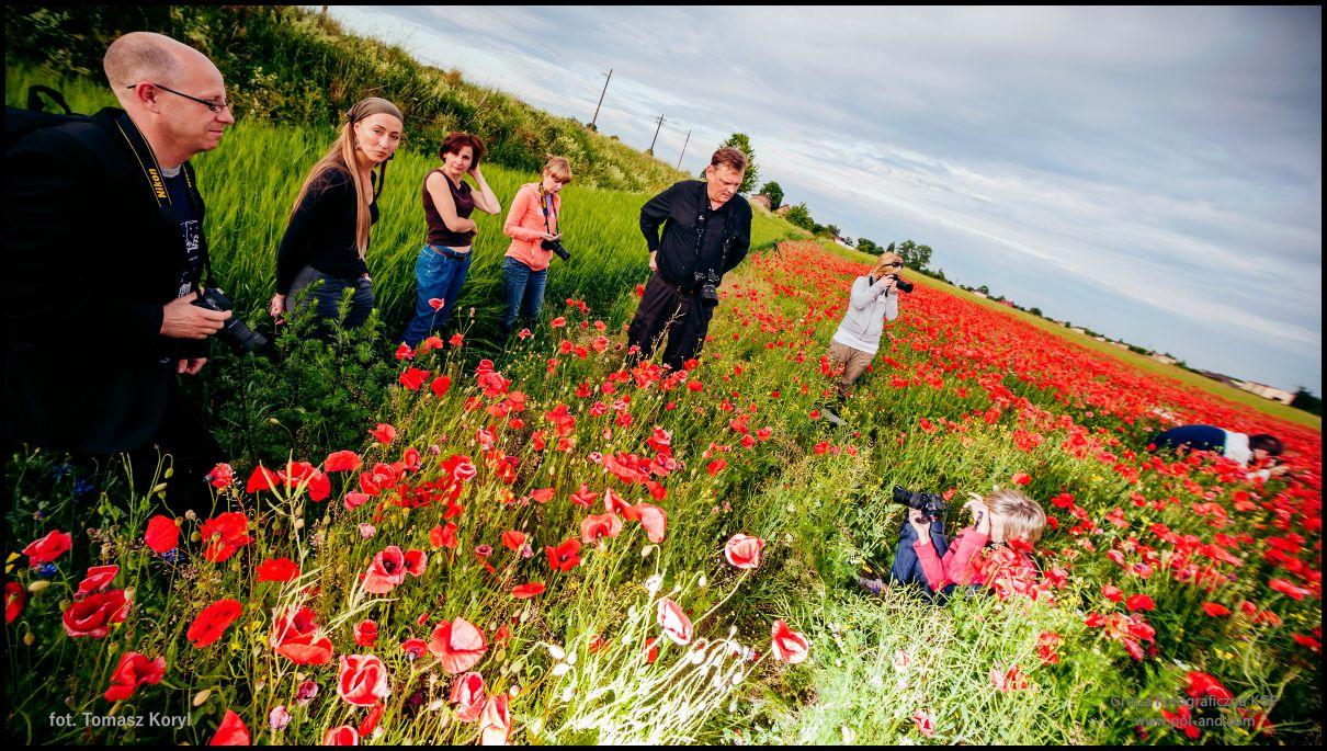 Plener fotograficzny w polu czerwonych maków. 2011-06-12